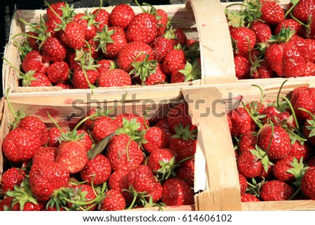 Strawberries in the punnet on natural background in country garden.