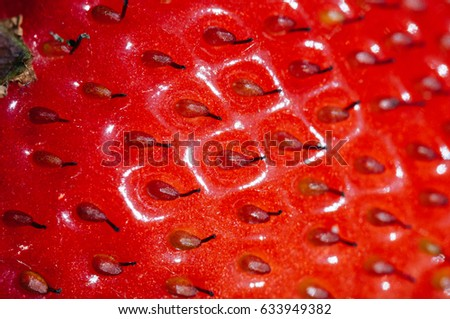 strawberry close up of seeds