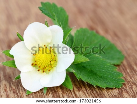 Strawberry flower with green leaves
