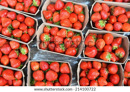 Strawberry  in the boxes - stock photo