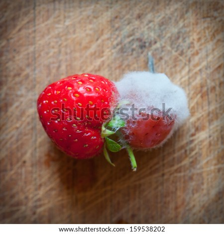 strawberry mold - stock photo