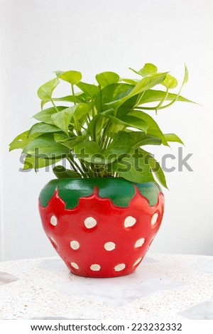 Strawberry plants in pots berry white background - stock photo
