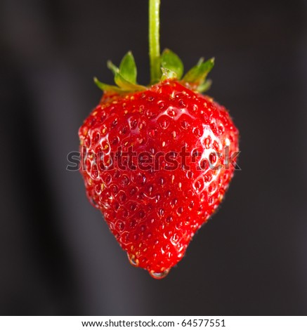 strawberry under the stream of water on a dark background - stock photo