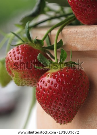 strawbery on the balcony                                - stock photo