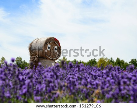 Strawman and lavender field at Shikisai park (The Hill of Seasonal Colours), Biei, Hokkaido, Japan - stock photo