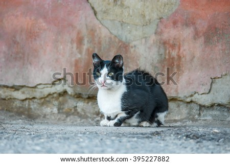 Stray cat.Black and white homeless cat outdoors sitting alone near weathered wall,copy space.Homeless cat.Dirty feral cat is sitting on the ground looking at camera,a lot of space for text,copyspace - stock photo