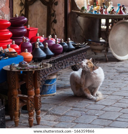 stray cat in the souks of Marrakesh - stock photo