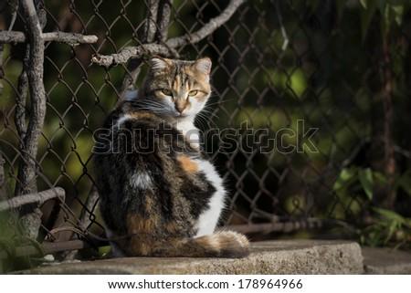 Stray Cat on Street - stock photo