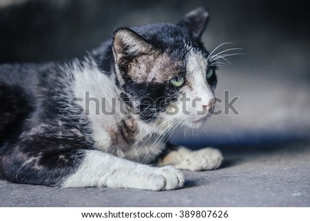Stray cat, scarred, resting#3 - stock photo