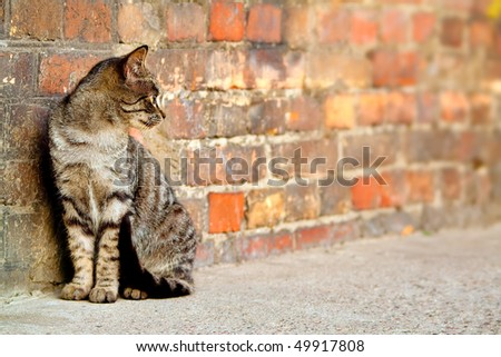 stray cat sitting by the wall and looking somewhere - stock photo
