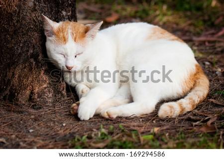 stray cat sleeping near the tree in public park - stock photo