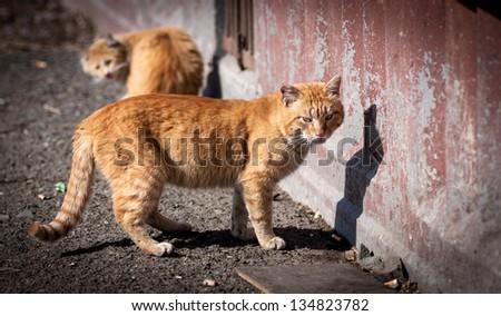 Stray cats. - stock photo