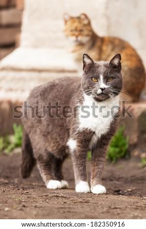 stray cats - stock photo