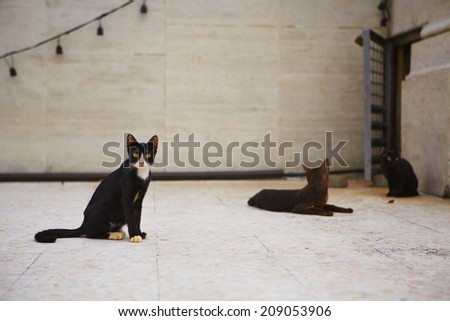 Stray dark cats with yellow eyes on the street