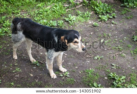 Stray dog. - stock photo