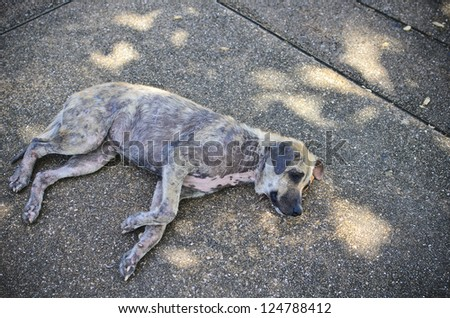 Stray dog�¢??�¢?? laying on the concrete ground - stock photo