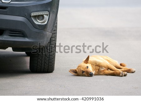 Stray dog looking at the sky lying on the road beside the car