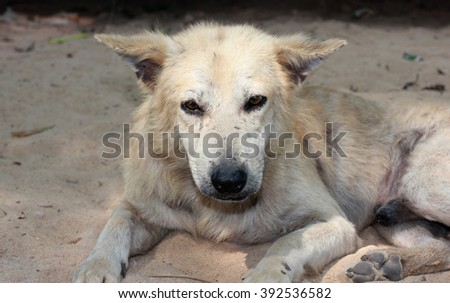 Stray dog looking dirty and loneliness