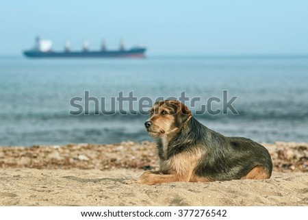 Stray Dog on the Shore of the Black Sea - stock photo