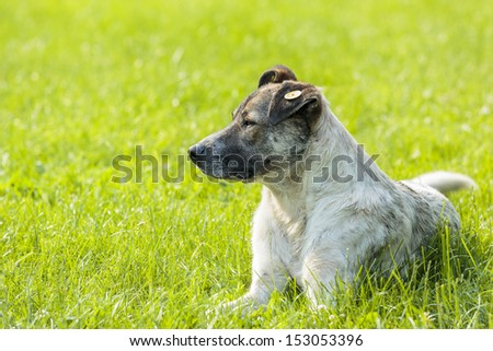 Stray dog resting on the lawn and keeping warm in the sunlight. - stock photo
