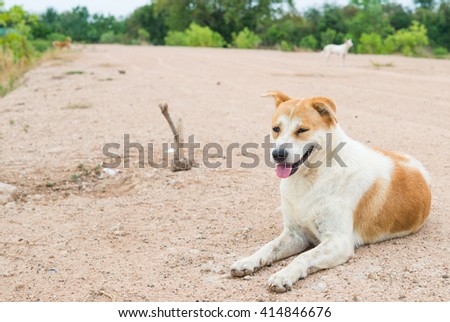 Stray dog sit on field Wait for the kindness to food - stock photo
