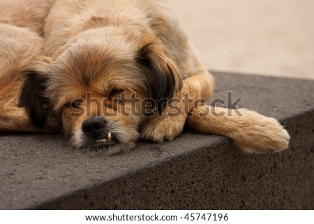 Stray dog sleeping - stock photo