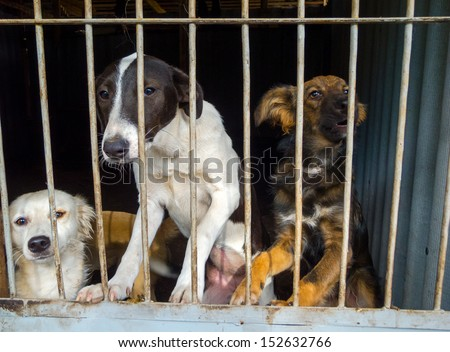 Stray dogs in the shelter - stock photo