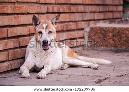 Stray dogs living  on the streets or communities. - stock photo