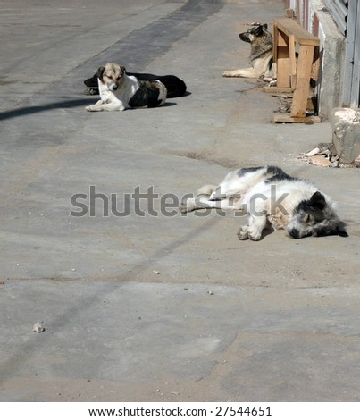 stray dogs on street at day - stock photo