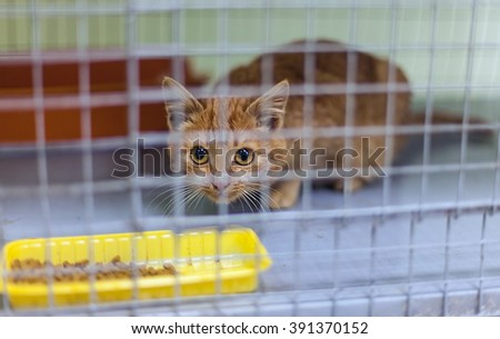 Stray kitten in a shelter - stock photo