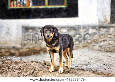 Stray mutt dog standing on the street in a city looking sad in front of house