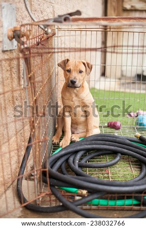 Stray puppy waits in crate at animal shelter - stock photo