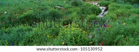 Stream and Alpine Flowers, Ouray, Colorado - stock photo