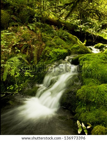 Stream cascading over moss covered rocks.