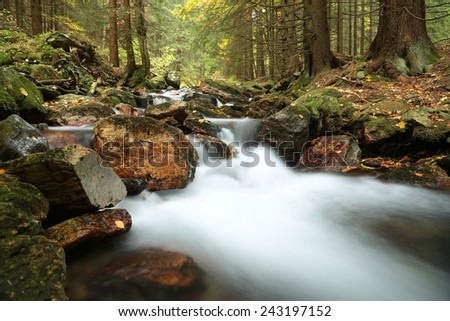 Stream flowing through the forest from the mountain. - stock photo