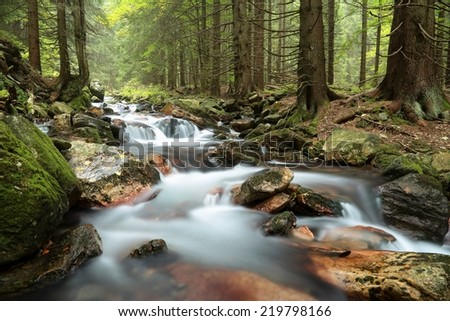 Stream flowing through the forest from the mountain slope. - stock photo