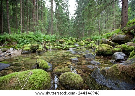 Stream in a forest in polish mountains, Tatry, Poland - stock photo