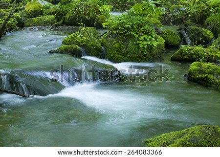 Stream in green forest - stock photo