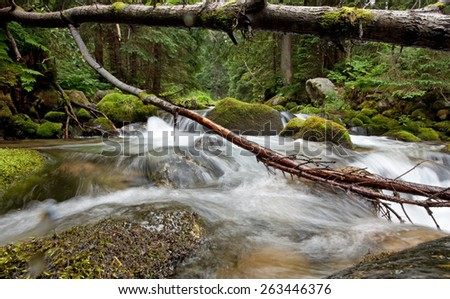 Stream in old woodland, Tatry, Poland - stock photo
