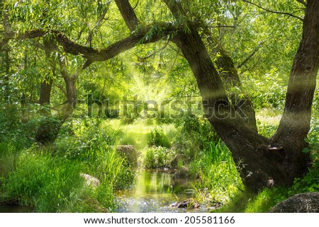 Stream in the tropical forest. Environment sunny landscape - stock photo