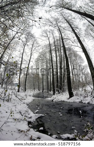 Stream in the winter forest among the trees