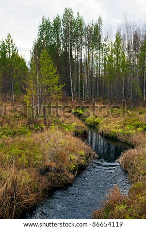 Stream in the woods - stock photo