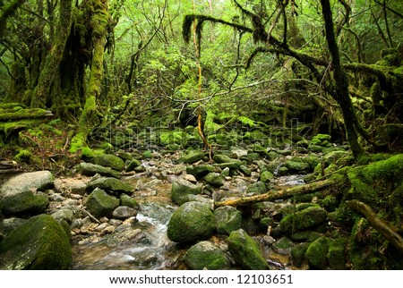 Stream running in the mossy forest - stock photo