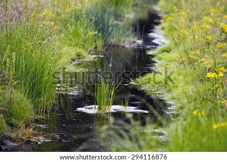 Stream with plants all over in summer - stock photo