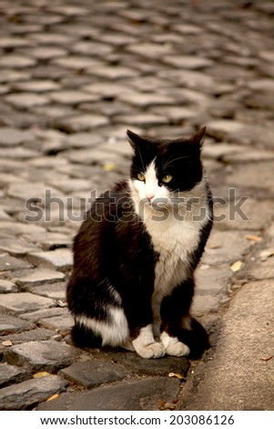 Street Cat in Rome - stock photo