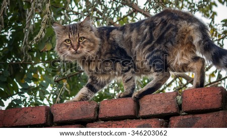 Street cat staring from a brick wall - stock photo