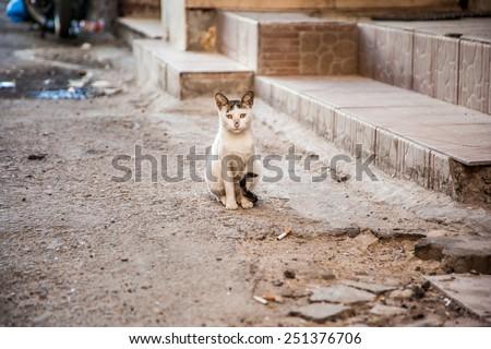 Street homeless cat, in Egypt - stock photo