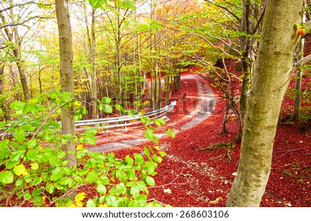 Street in the forest with summer and autumn colors - stock photo