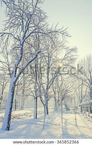 Street of Bucharest, Romania from Europe with trees and branches covered with snow and ice, light pole, portrait.
