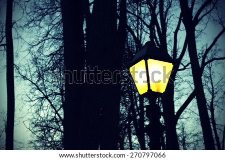 Street retro lighting against the evening sky and silhouettes of trees - stock photo